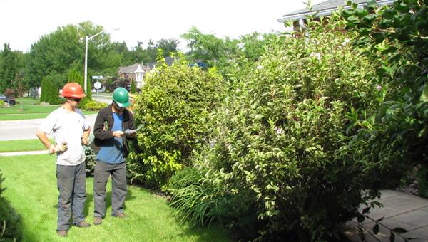 Arborist Report